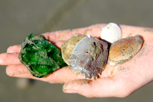 treasures found on the beach