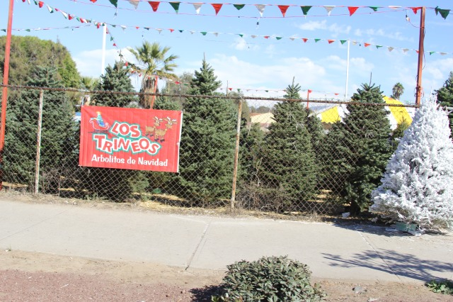 Christmas trees from the NW, all the way down in Ensenada!!