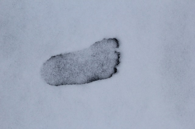 Found this in the driveway…my children run barefoot even in the snow.